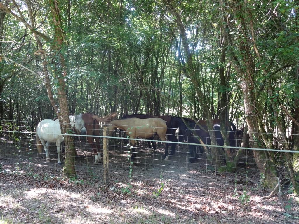 14 chevaux