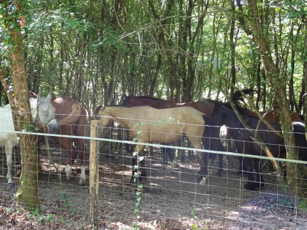 15 chevaux