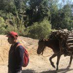 Le transport à dos d'âne