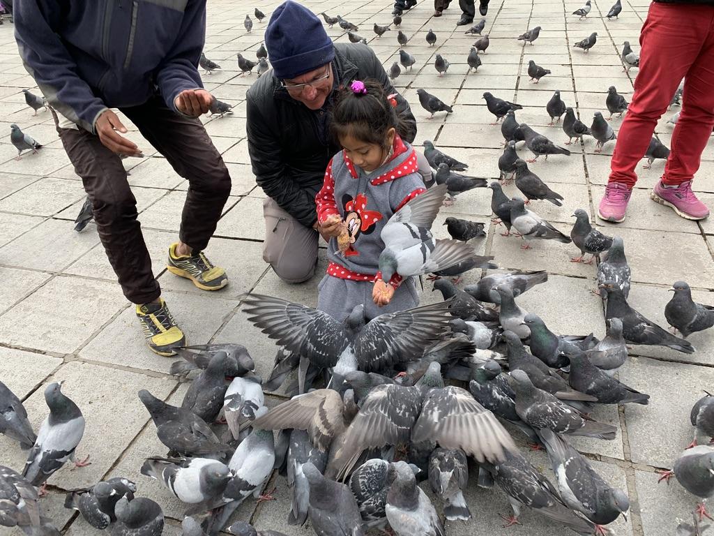 Les pigeons ne sont pas sauvages
