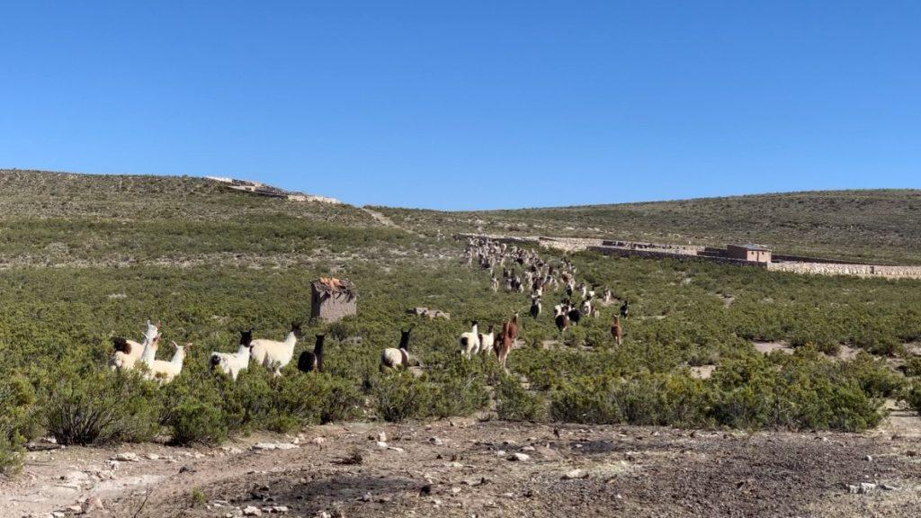 Regreso del día del pastoreo