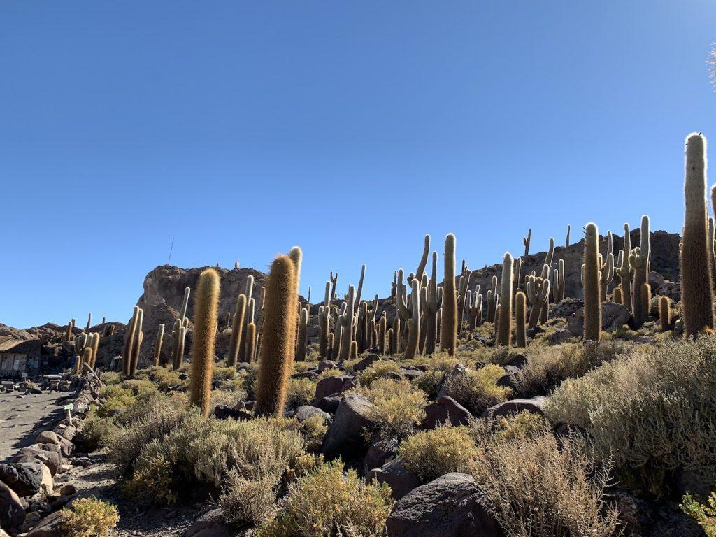 Autre vue des cactus