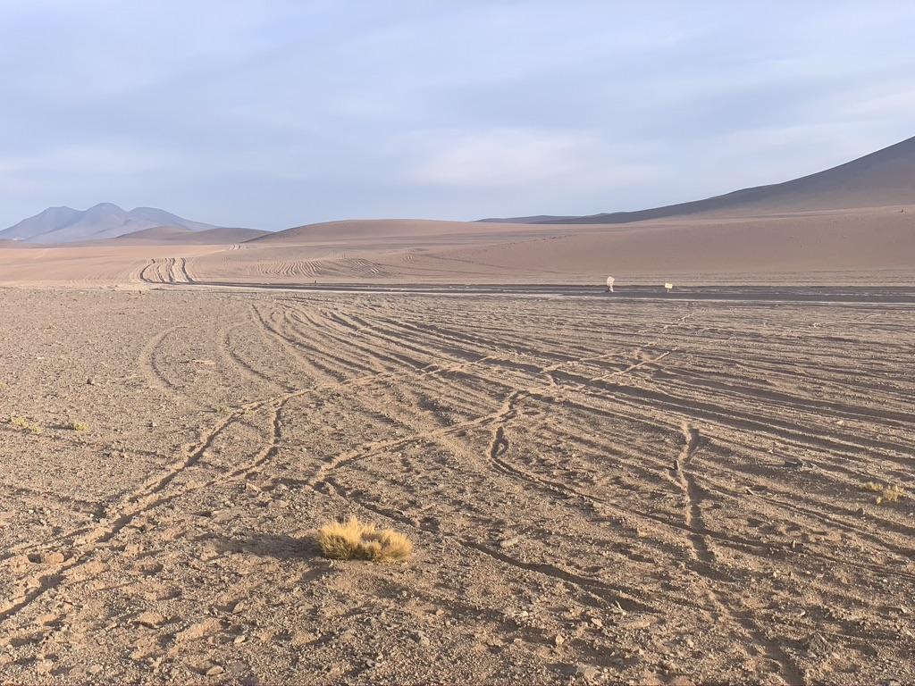 Hermosas dunas