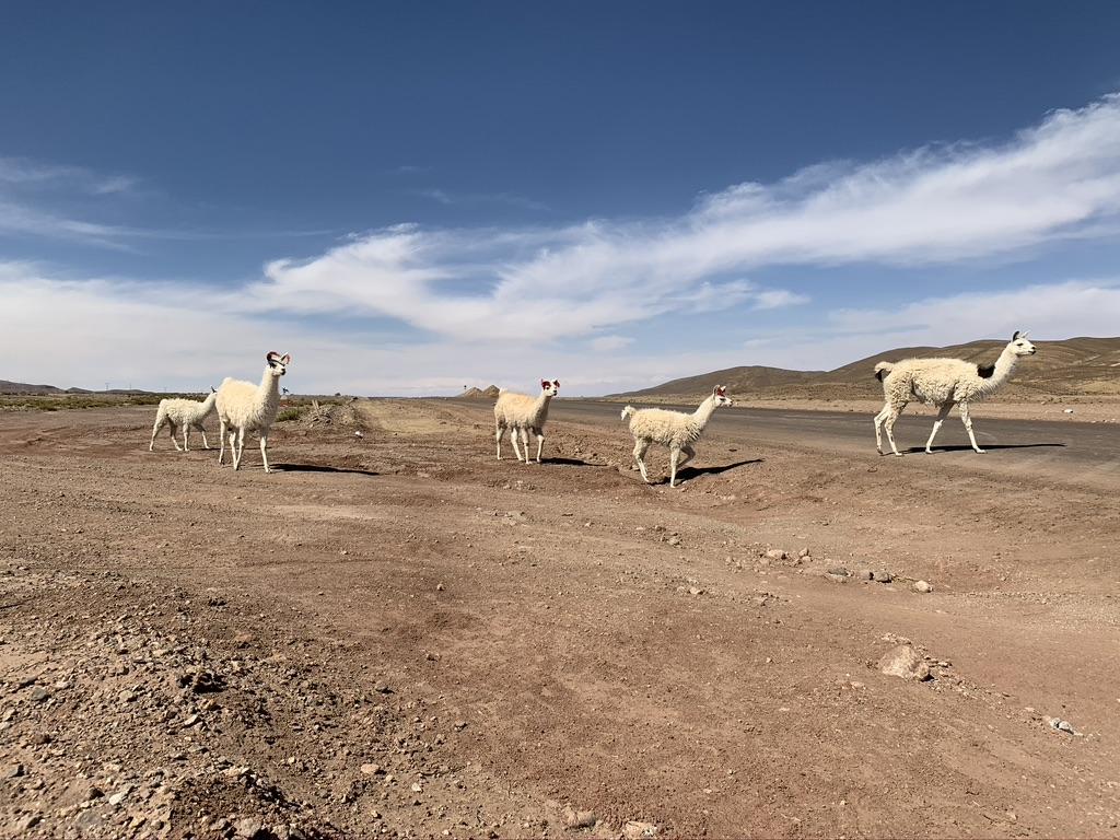 Otros residentes de Lipez