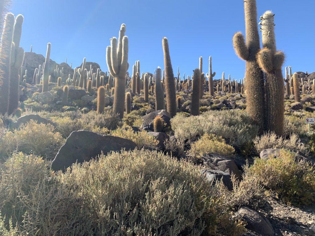 Incahuasi, la isla de cactus