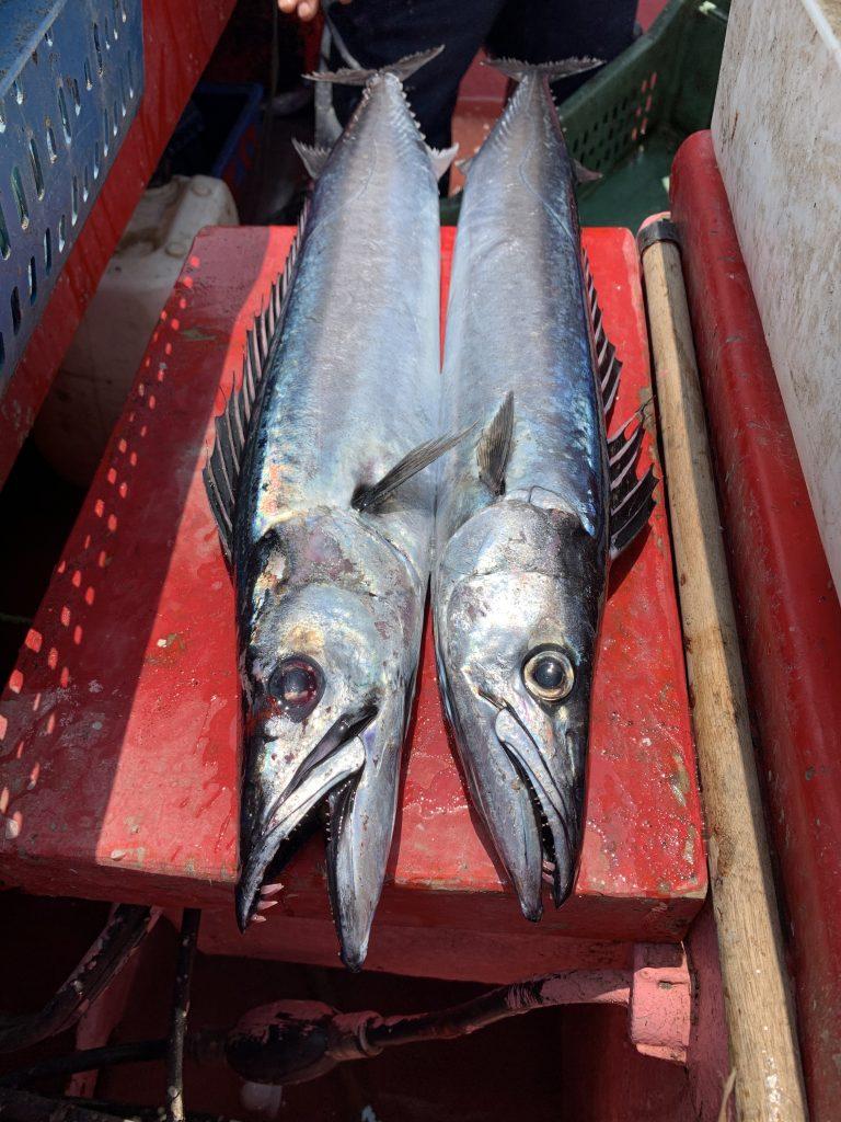 2 beaux poissons pour notre barbecue