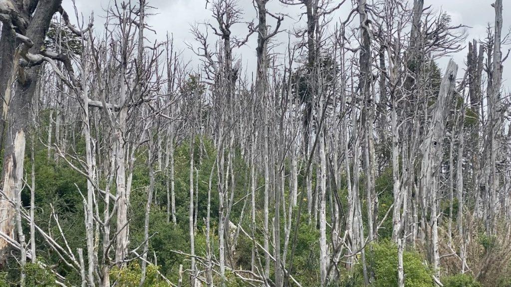 Une autre image des dégâts du volcan