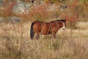 La liberté en Patagonie