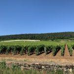 Alineación de vides de Borgoña
