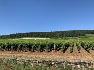 Alignement des ceps de Bourgogne