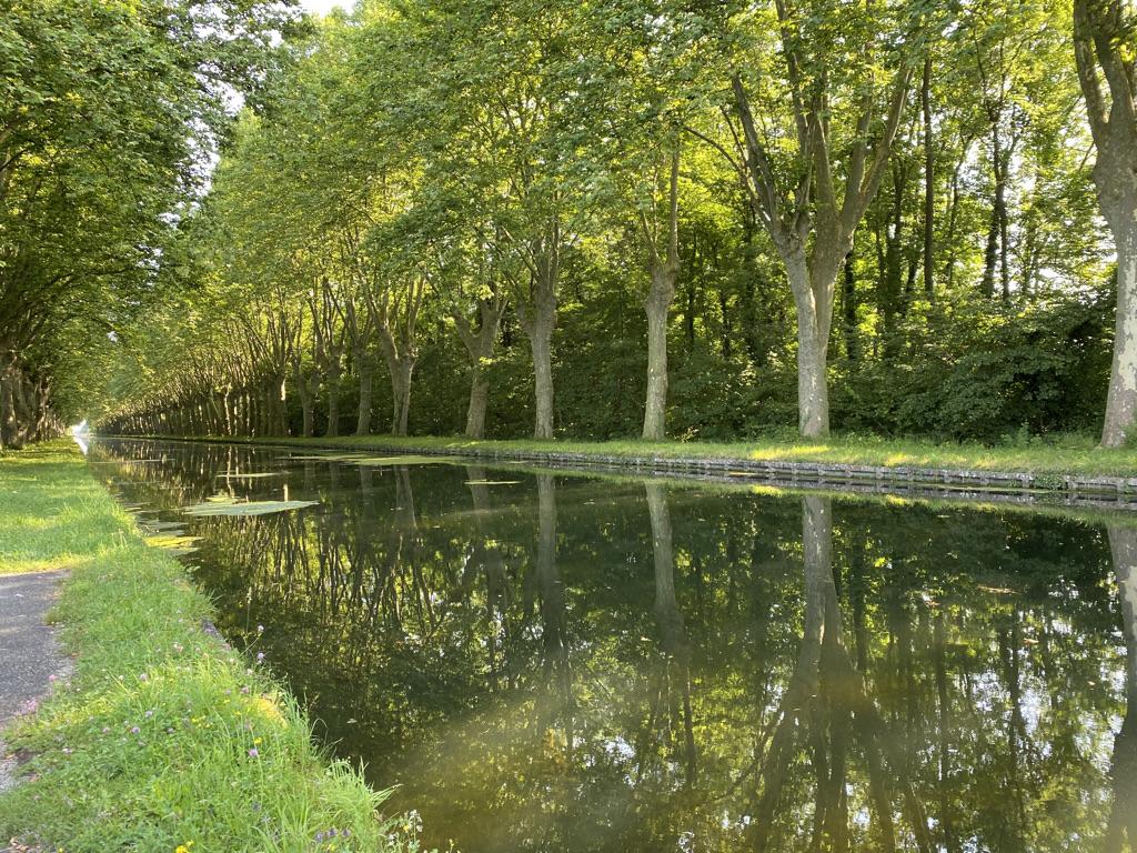 Verdure sur le canal